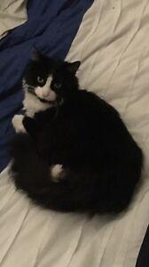 Missing female cat Caroline Springs Melton Area Preview