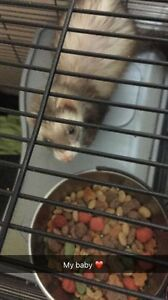 Ferret looking for forever home