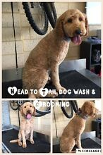 Head to Tail Dog Washing & Grooming Hamilton Hill Cockburn Area Preview