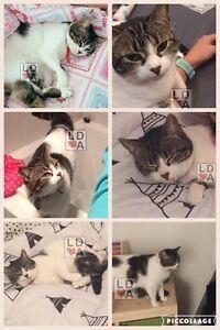 Lost cat! Lyndoch Barossa Area Preview