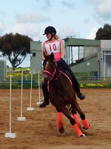 Equine Enthusiasts Club!!! Koo Wee Rup Cardinia Area Preview