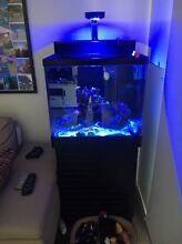 Marine fish tank setup Rivervale Belmont Area Preview