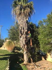 Quality Tree Surgery (lopping) at cheap prices! Scarborough Stirling Area Preview