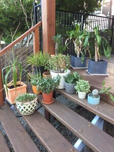 14 plants with pots and 2 fake plants Windsor Brisbane North East Preview