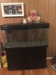 260 litre fish tank Bellerive Clarence Area Preview