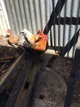 Roosters Hurstville Hurstville Area Preview