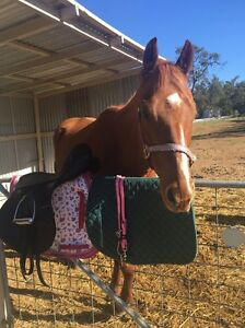 Beautiful horse & All TACK & SADDLE included $1,000 West Toodyay Toodyay Area Preview