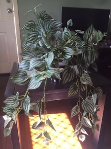 4 x fake plants Coorparoo Brisbane South East Preview