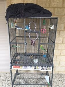 Bird cage and 3 birds Canning Vale Canning Area Preview