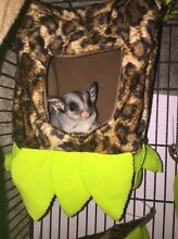 Looking for a hand take sugar glider Taylors Lakes Brimbank Area Preview