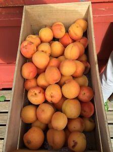 Apricots Irymple Mildura City Preview