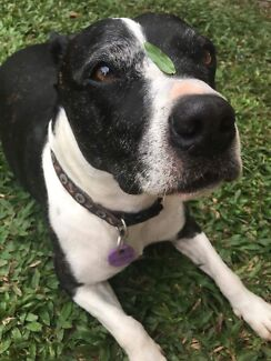 Wanted: Dog looking for loving home