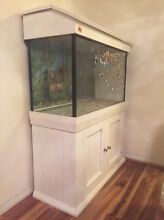 Fish tank with filter for sale Beverly Hills Hurstville Area Preview