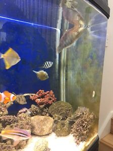 Marine fish saltwater westmeaad Guildford Parramatta Area Preview