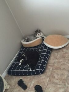 Cats free to good home Beresfield Newcastle Area Preview
