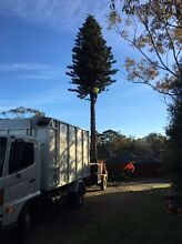Best offer tree lopping Sydney South Granville Parramatta Area Preview