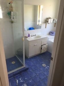 Tiler wanted Fitzgibbon Brisbane North East Preview