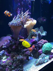 Marine aquarium Seaford Morphett Vale Area Preview