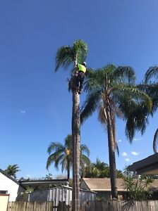 Tree Lopping Burleigh Heads Gold Coast South Preview