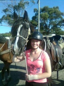 Looking for a horse to ride Officer Cardinia Area Preview