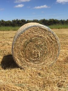 Hay - clover, phalaris and rye grass round bales Winchelsea Surf Coast Preview