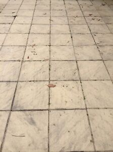 Concrete pavers - free Cherrybrook Hornsby Area Preview