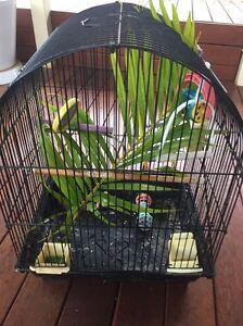 Bird cage $10.00 Roselands Canterbury Area Preview