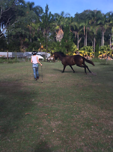 Learn to train your horse Burpengary Caboolture Area Preview
