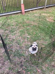 Puppy pen Ferny Grove Brisbane North West Preview