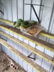 Nesting Boxes For Aviary Birds Gumtree Australia Free