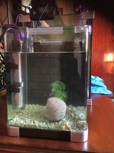 Fish tank and fish Carina Brisbane South East Preview