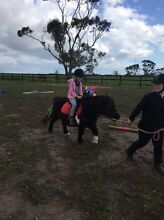 Free Horse Rides/Lessons Koo Wee Rup Cardinia Area Preview