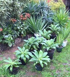 Plants for Sale! Hoppers Crossing Wyndham Area Preview