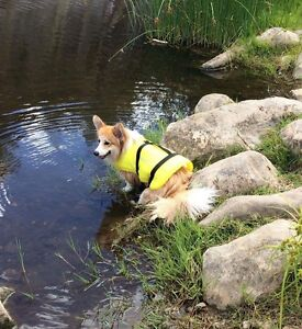 Dog life jacket Watson North Canberra Preview