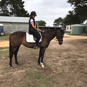 Brown TB Gelding Gnarwarre Surf Coast Preview