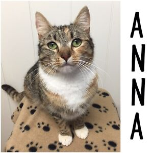 """""""Anna"""" Needs A Home! EATONS HILL VET Eatons Hill Pine Rivers Area Preview"""