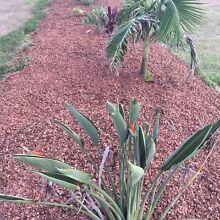 On special turf laid with mulch or sandstone Rochedale Brisbane South East Preview