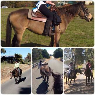 Buckskin mare 14.3hh suit trail riding, easy keeper
