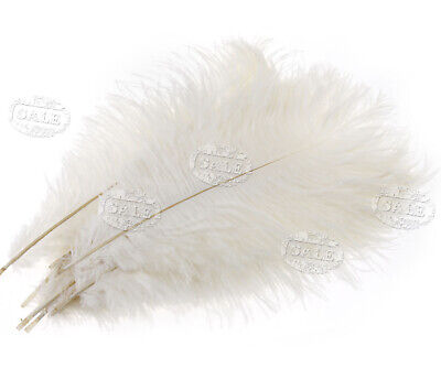 White Ostrich Feathers (10 x Arts Crafts Ostrich Feathers Fluffy 10