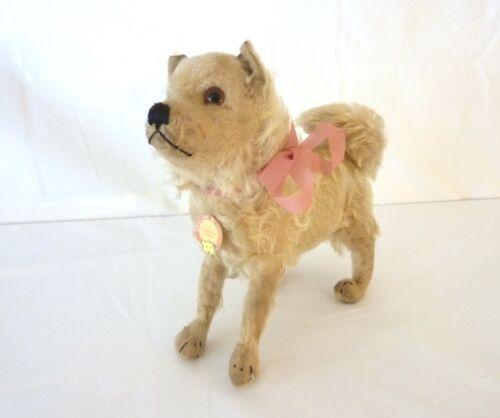 "Antique Vintage Steiff CHOW CHOW BROWNIE Dog Pre War 9 1/2"" 28 cm 1928-1932"