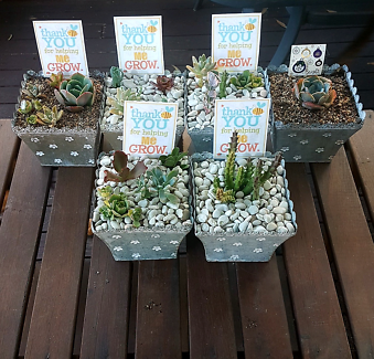 Succulent gifts for xmas or thank you teacher gifts Maryland Newcastle Area Preview