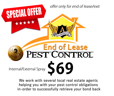 End of Lease Pest Control Special