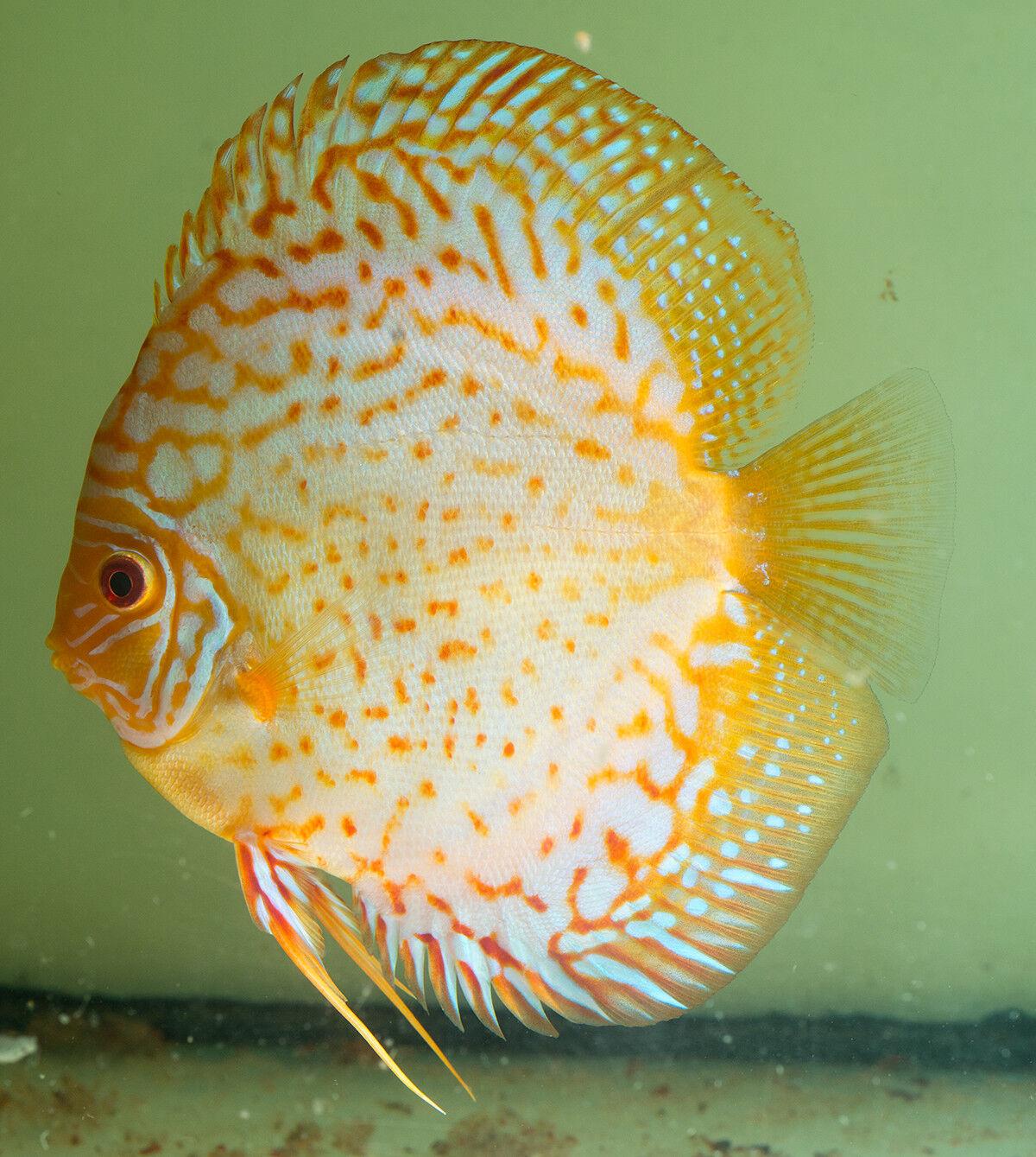 Fishroom visit