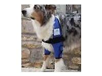 Dog Orthopedic aid XL - callus protection