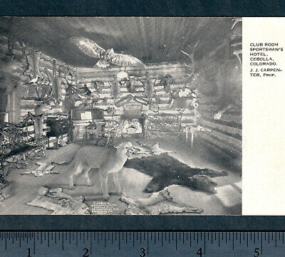 Cebolla Colorado ca. 1910 Ghost Town Sportsmans Hunting Lodge Taxidermy PostCard