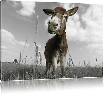 Tag Leinwand (Esel in Feld in sonnigen Tag Leinwandbild Wanddeko Kunstdruck)