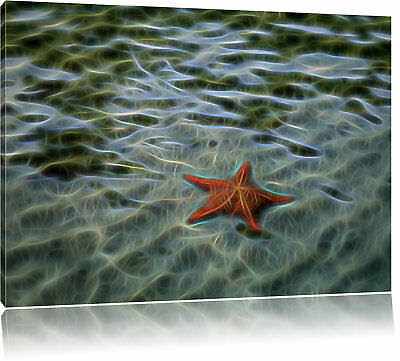 Seestern Kunst (Seestern im Wasser Leinwandbild Wanddeko Kunstdruck)