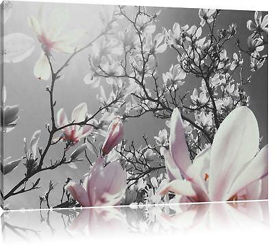 schöne Magnolie Blüten schwarz/weiß Leinwandbild Wanddeko Kunstdruck