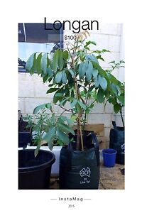 Plant and fruit tree for sale Baldivis Rockingham Area Preview