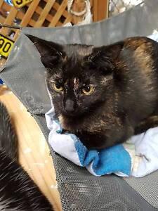 RESCUE CAT - Cat Rescue Port Stephens - Beryl Salamander Bay Port Stephens Area Preview
